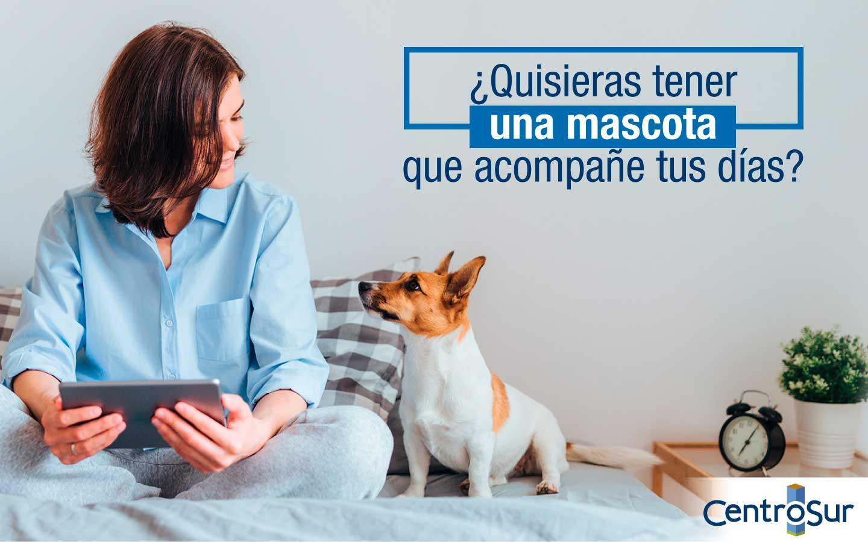 ¿Quisieras tener una mascota que acompañe tus días? Ten en cuenta esta información: