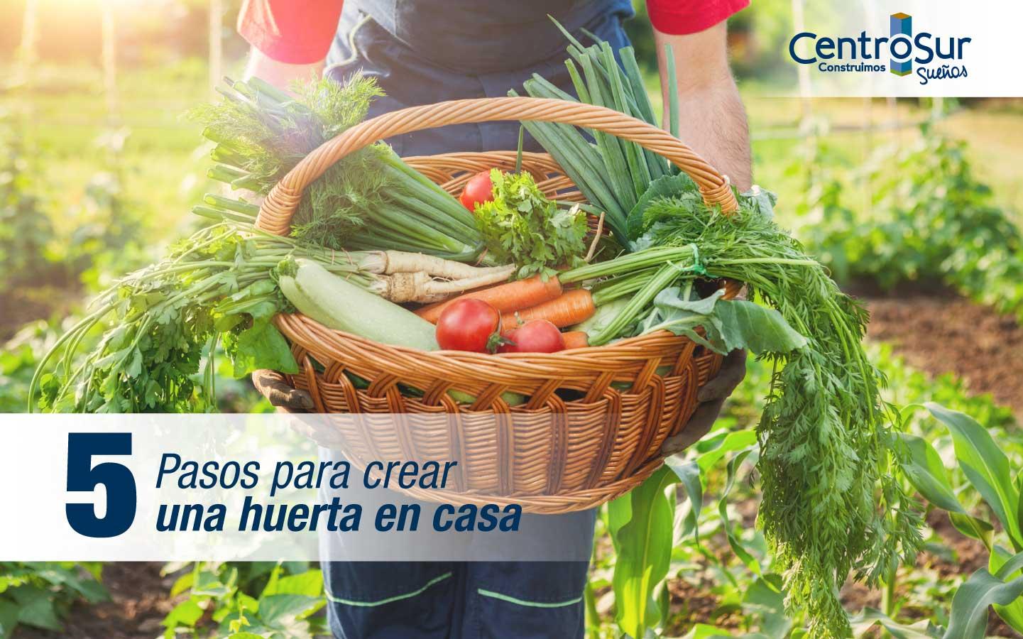 CINCO PASOS PARA CREAR UNA HUERTA EN CASA