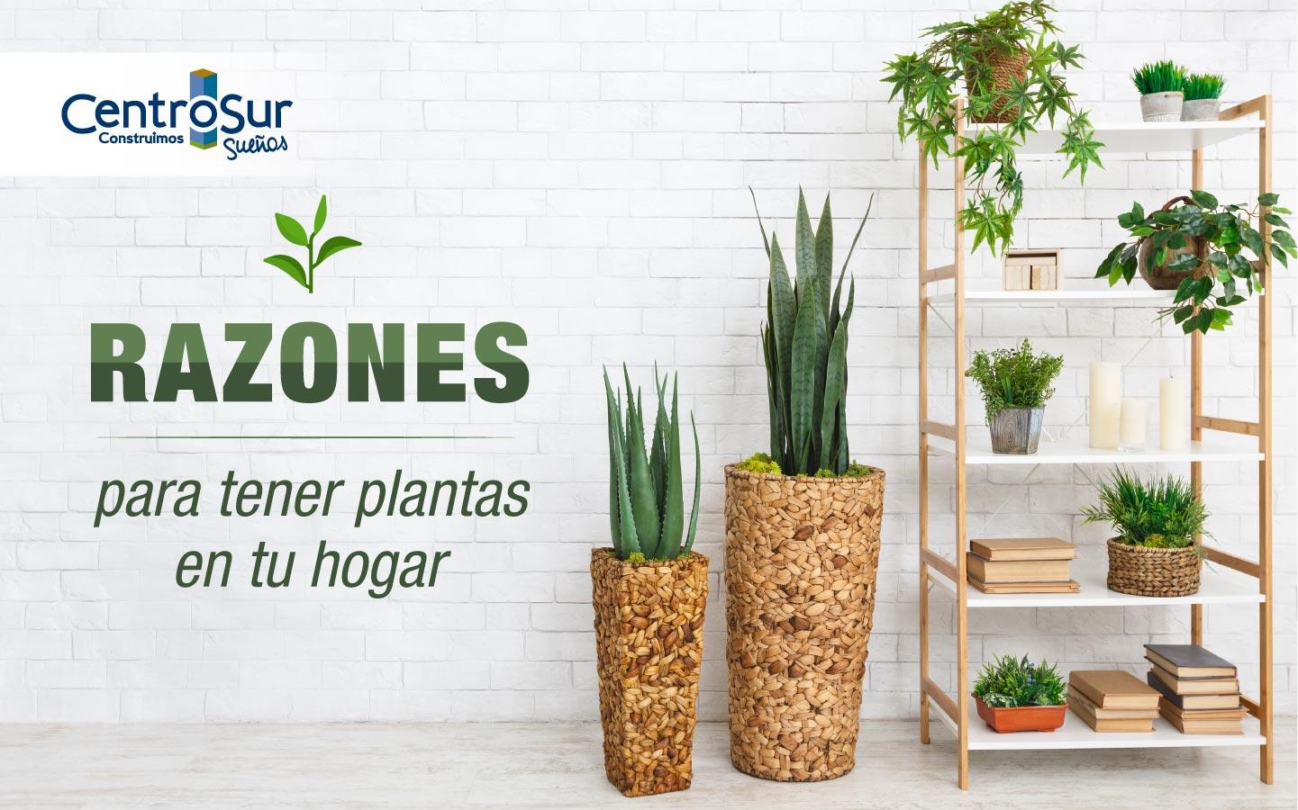 RAZONES PARA TENER PLANTAS EN TU HOGAR