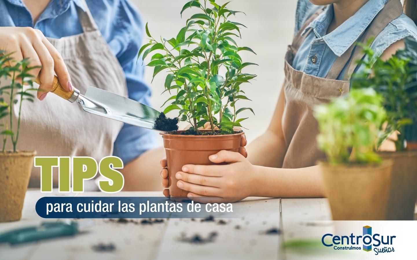 TIPS PARA CUIDAR LAS PLANTAS DE CASA